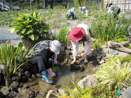 s-ガーデンメダカ池の大掃除