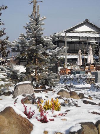 s-1ガーデンに初雪